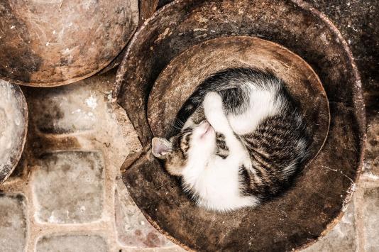 cat-691912_1280 (1)